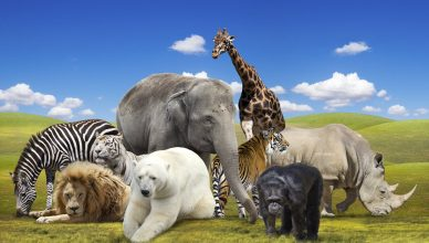 Từ vựng về Tên tiếng Trung các Loài Động Vật