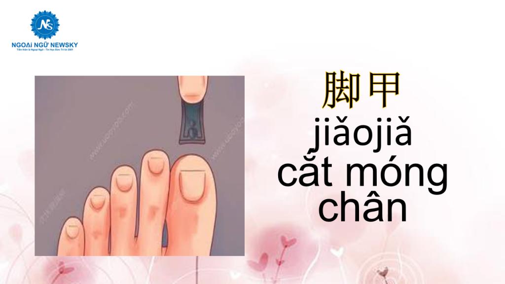 脚甲-jiǎojiǎ