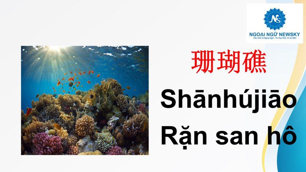 珊瑚礁- Rặn san hô