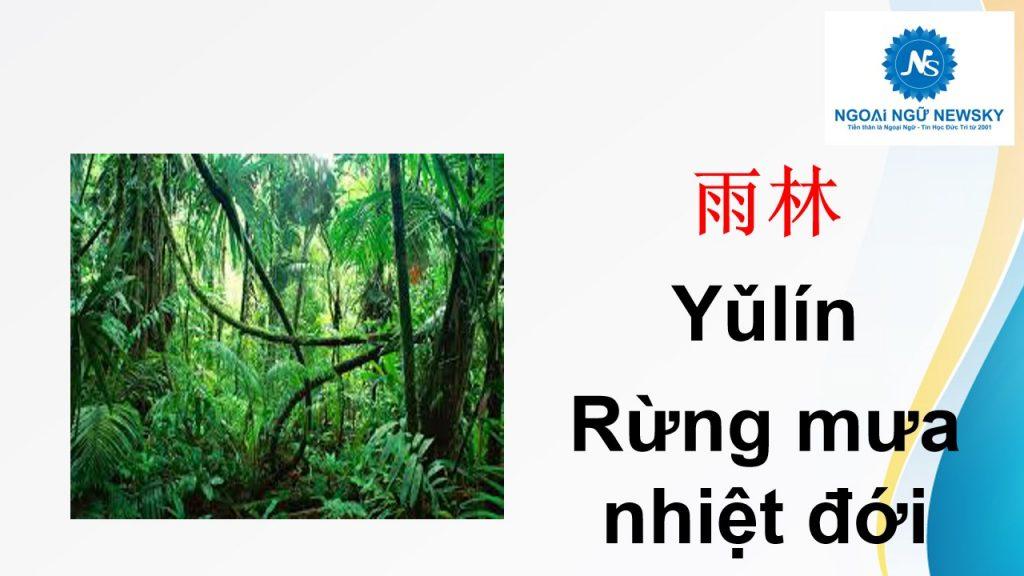 雨林- Rừng mưa nhiệt đới